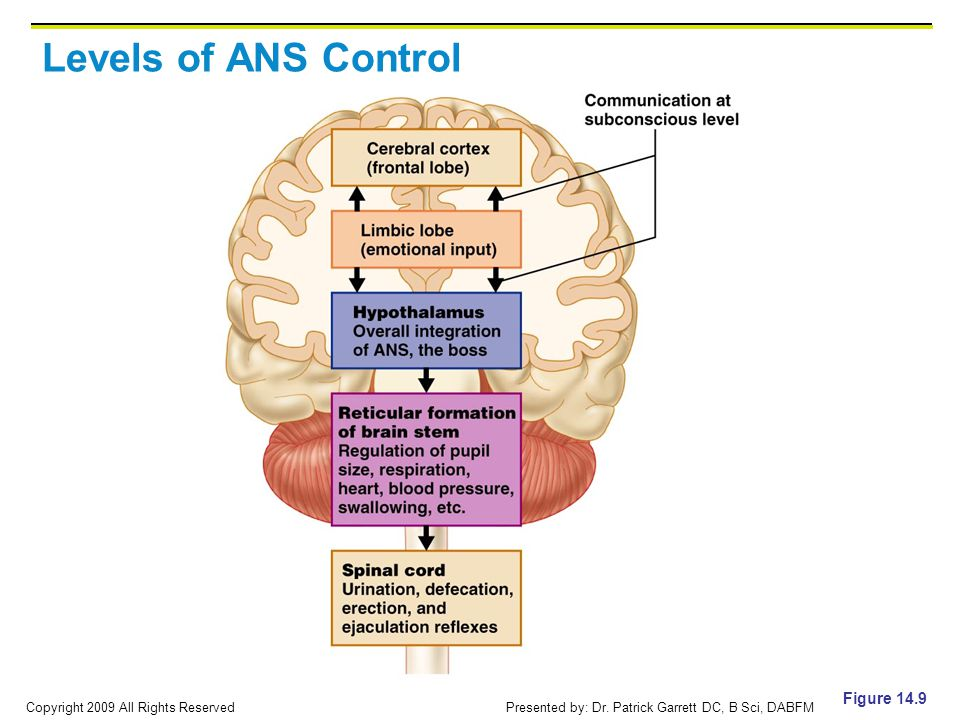 Levels of ANS Control Figure 14.9