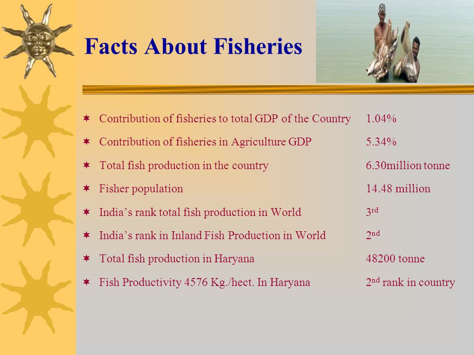 Facts About Fisheries Contribution of fisheries to total GDP of the Country 1.04% Contribution of fisheries in Agriculture GDP 5.34%