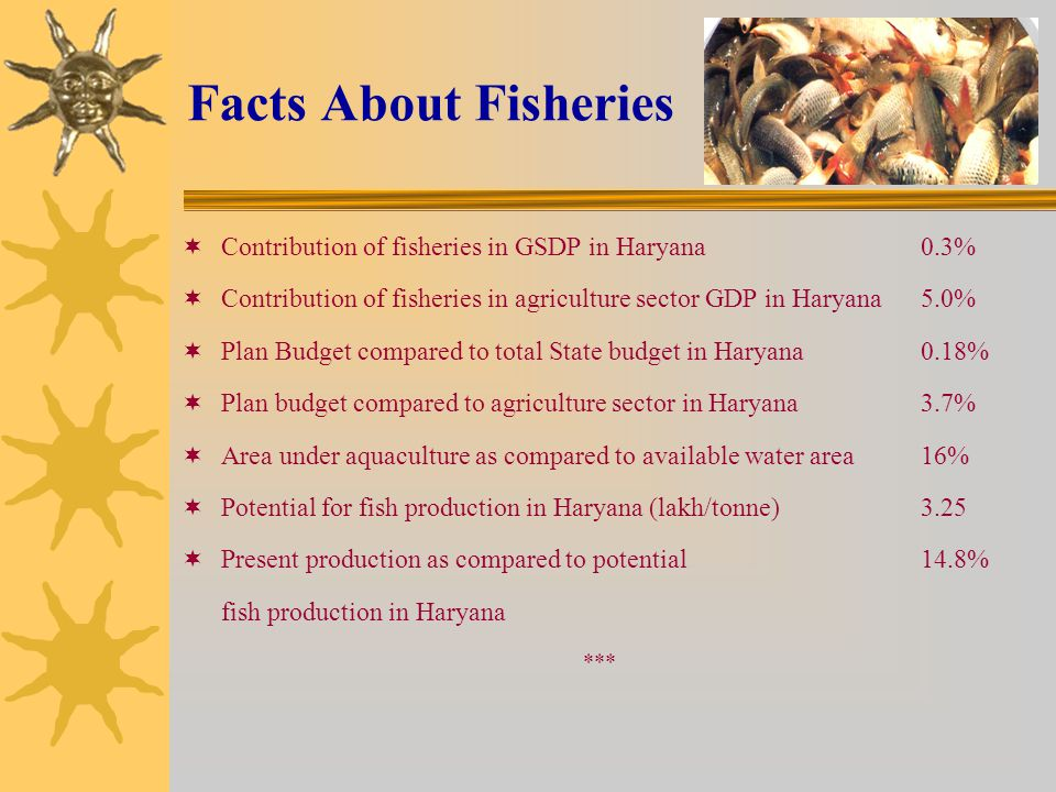 Facts About Fisheries Contribution of fisheries in GSDP in Haryana 0.3% Contribution of fisheries in agriculture sector GDP in Haryana 5.0%