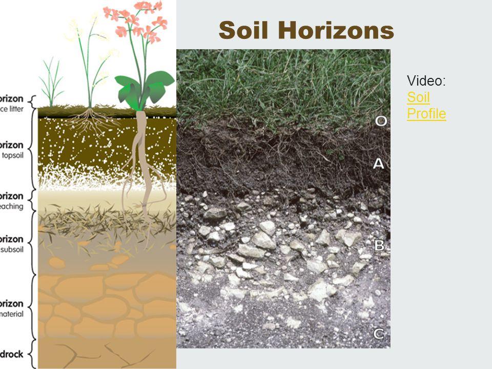 Soil Horizons Video: Soil Profile