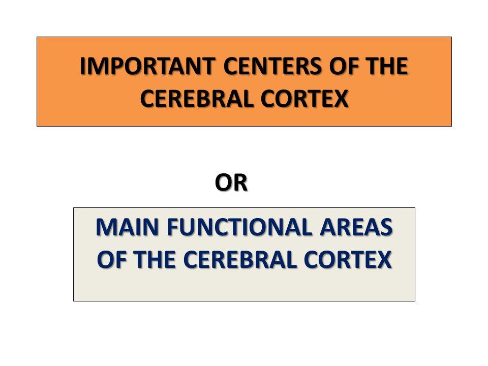 IMPORTANT CENTERS OF THE CEREBRAL CORTEX