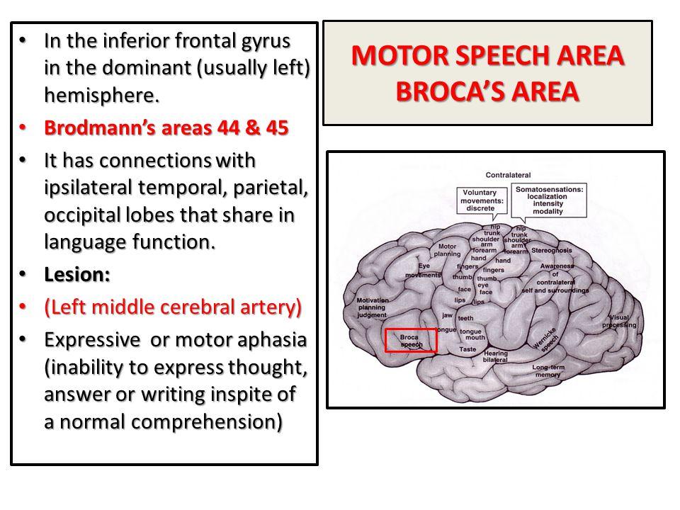 MOTOR SPEECH AREA BROCA'S AREA