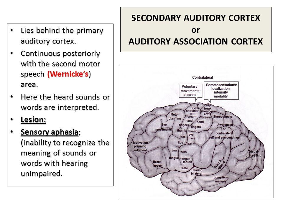 SECONDARY AUDITORY CORTEX or AUDITORY ASSOCIATION CORTEX