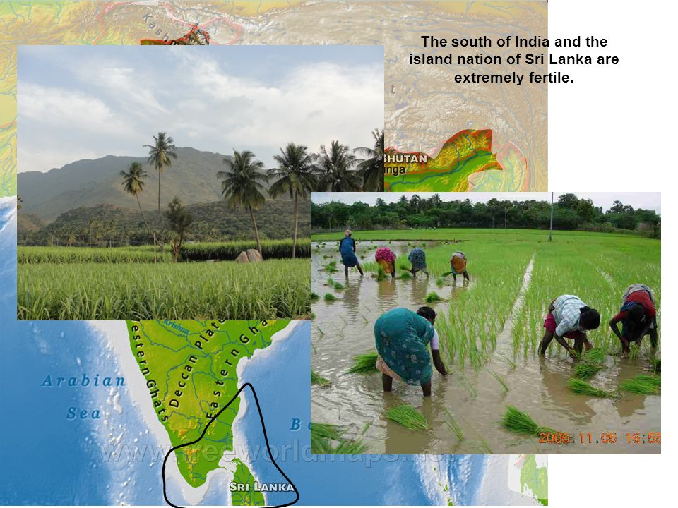 The south of India and the island nation of Sri Lanka are extremely fertile.