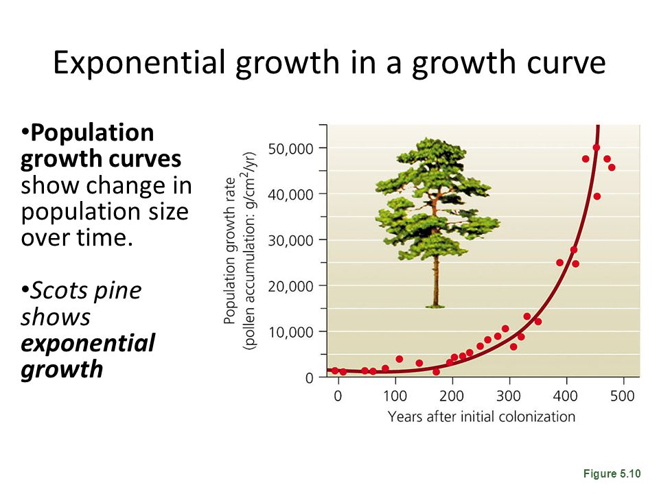 Exponential growth in a growth curve