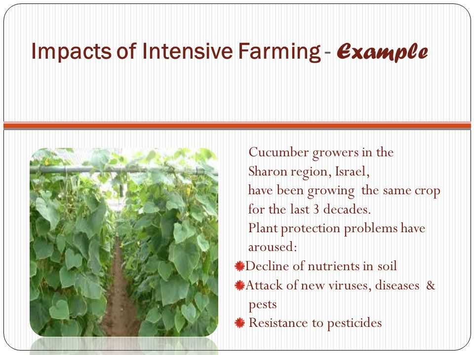 Impacts of Intensive Farming - Example