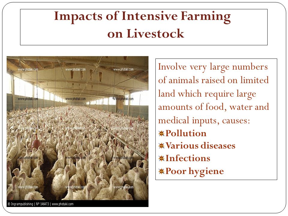 Impacts of Intensive Farming on Livestock
