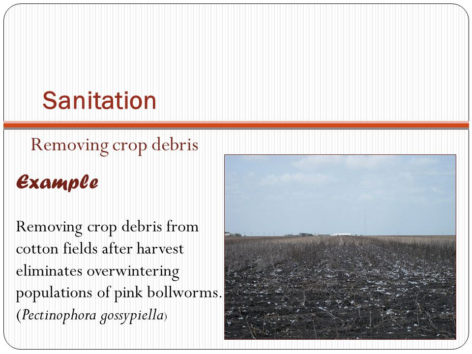 Sanitation Removing crop debris Example