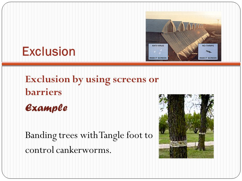 Exclusion Exclusion by using screens or barriers Example