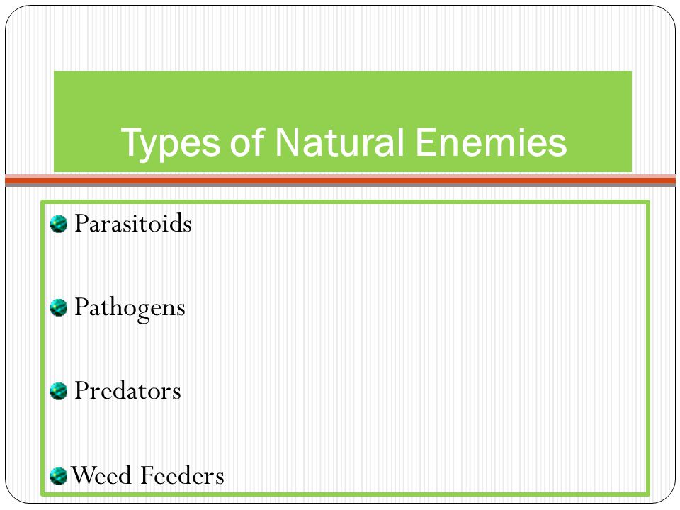 Types of Natural Enemies