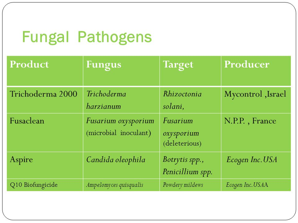 Fungal Pathogens Producer Target Fungus Product Mycontrol ,Israel