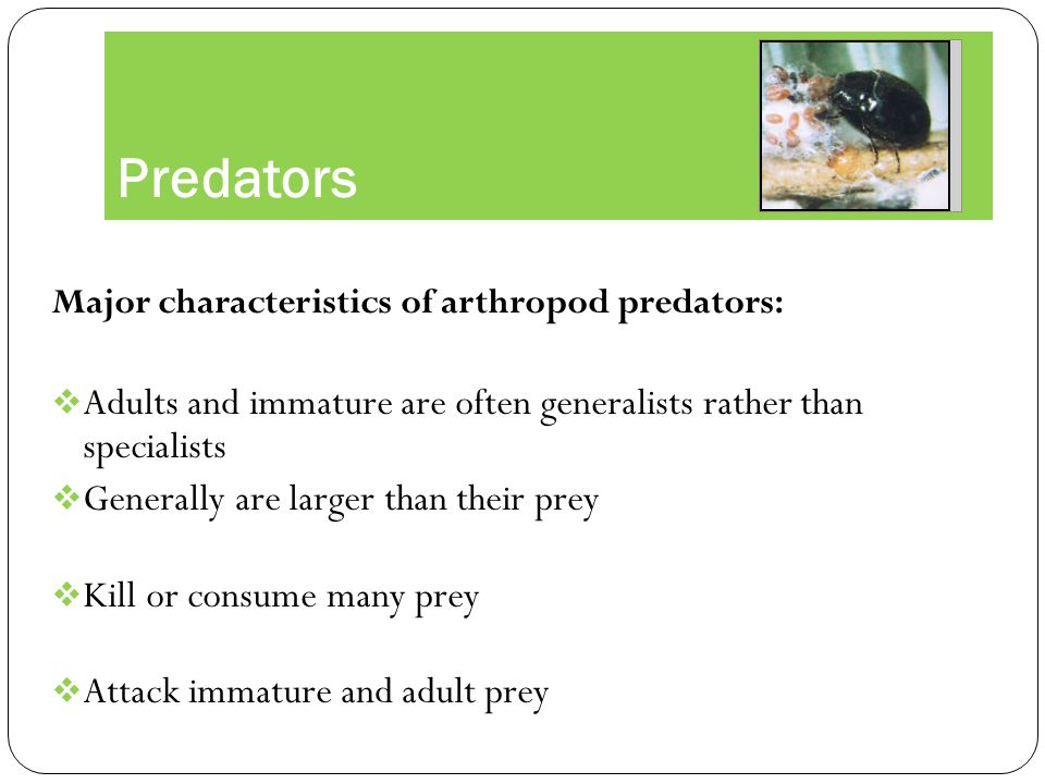 Predators Major characteristics of arthropod predators: Adults and immature are often generalists rather than specialists.
