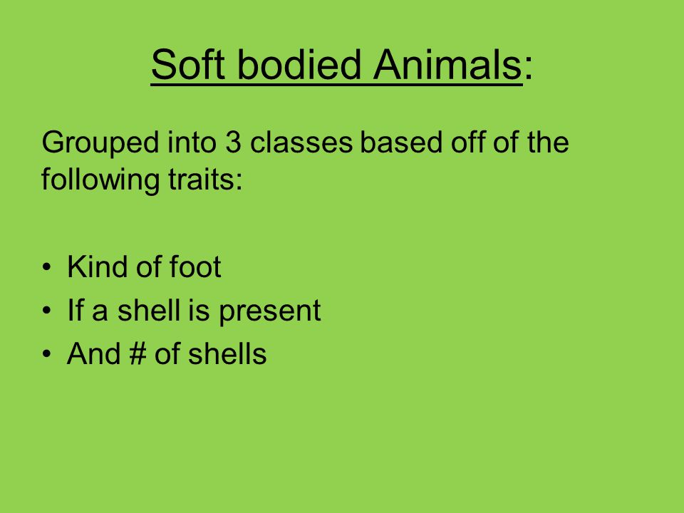 Soft bodied Animals: Grouped into 3 classes based off of the following traits: Kind of foot. If a shell is present.