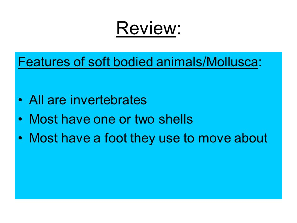 Review: Features of soft bodied animals/Mollusca:
