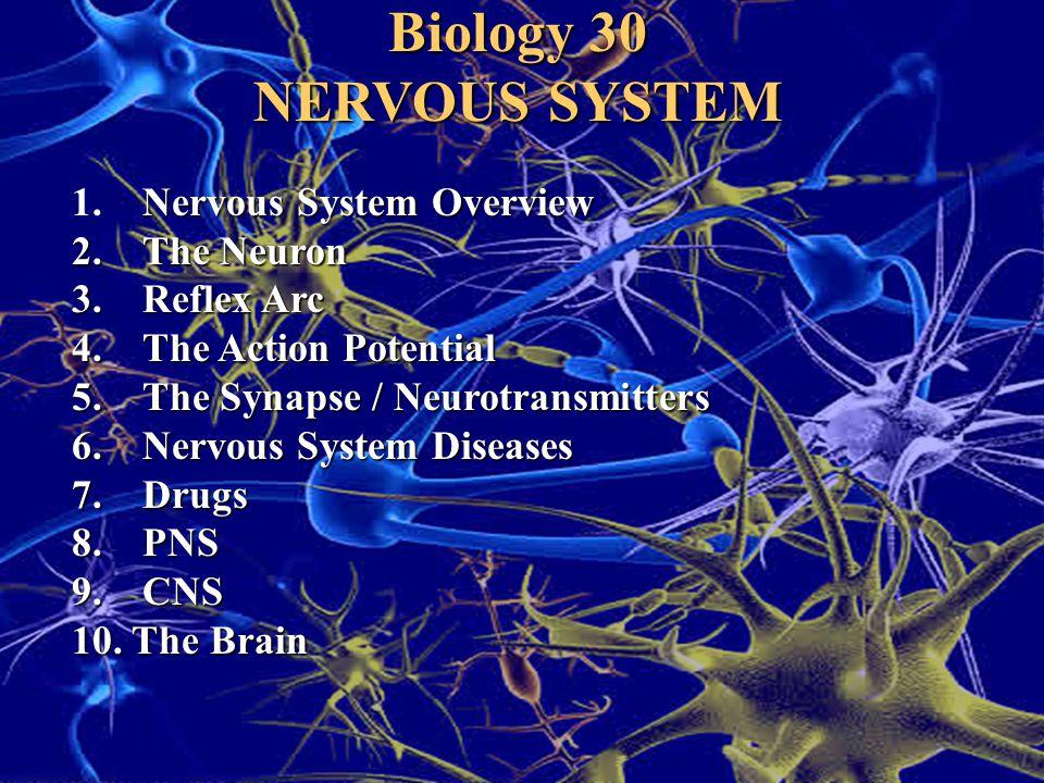 Biology 30 NERVOUS SYSTEM