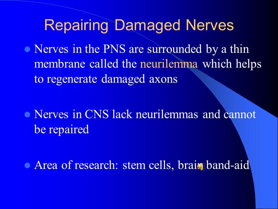 Repairing Damaged Nerves
