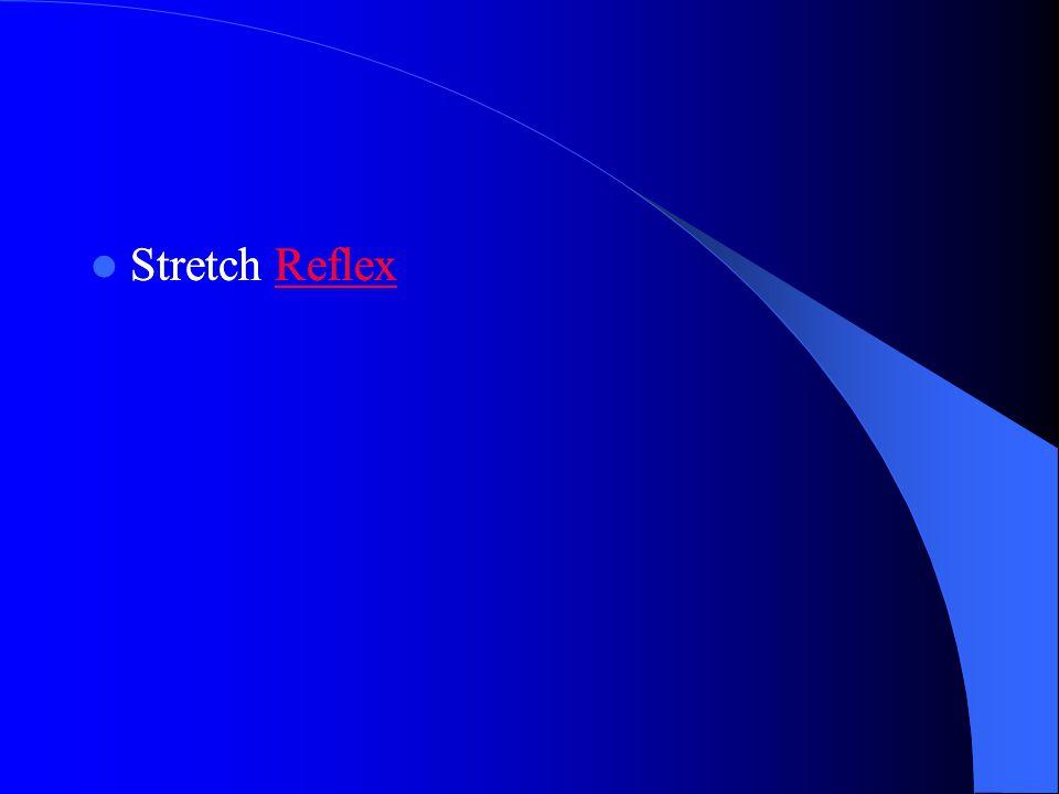 Stretch Reflex Stretch Reflex