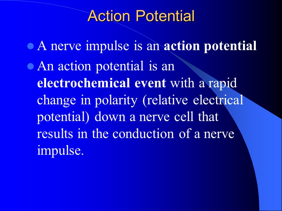 Action Potential A nerve impulse is an action potential