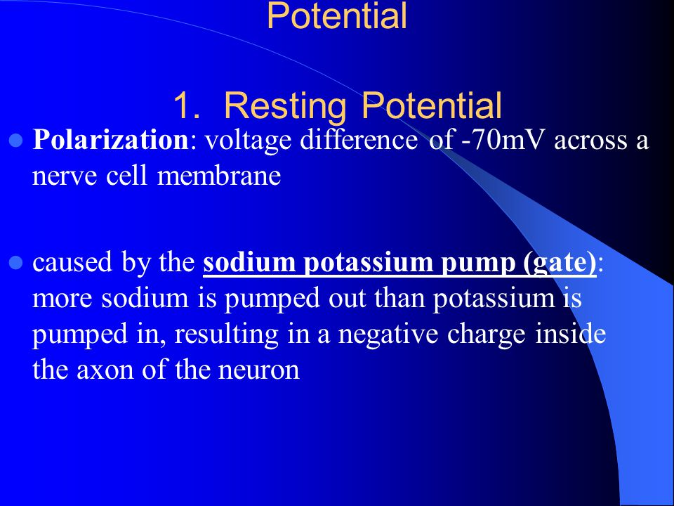 Steps of a Nerve Impulse (Action Potential 1. Resting Potential