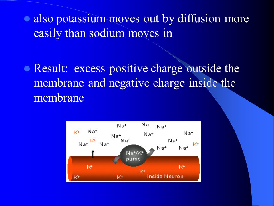 also potassium moves out by diffusion more easily than sodium moves in