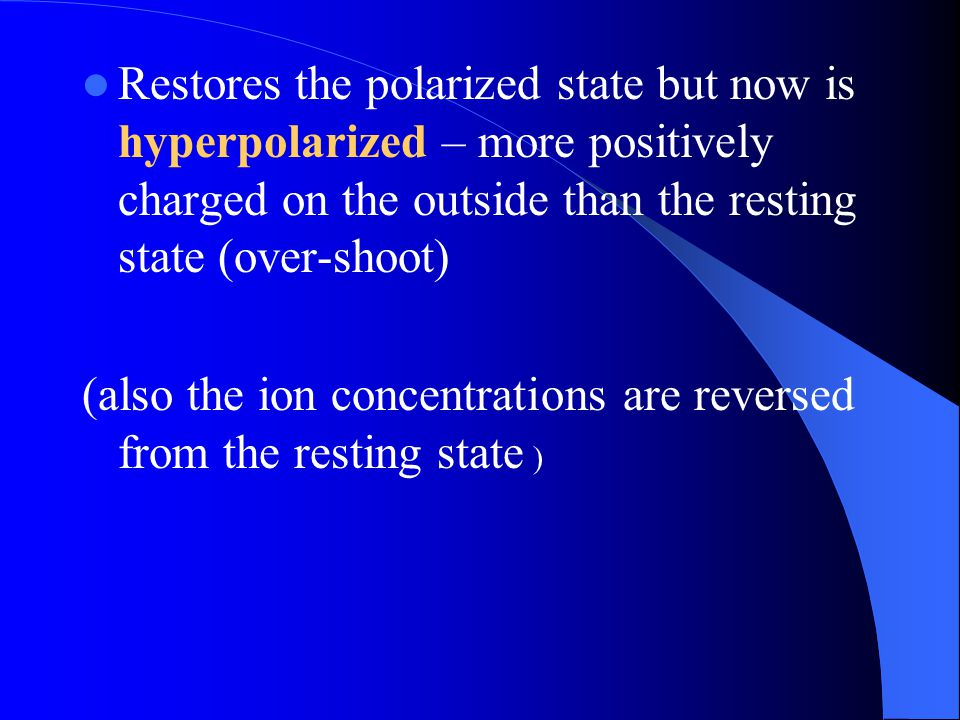 Restores the polarized state but now is hyperpolarized – more positively charged on the outside than the resting state (over-shoot)