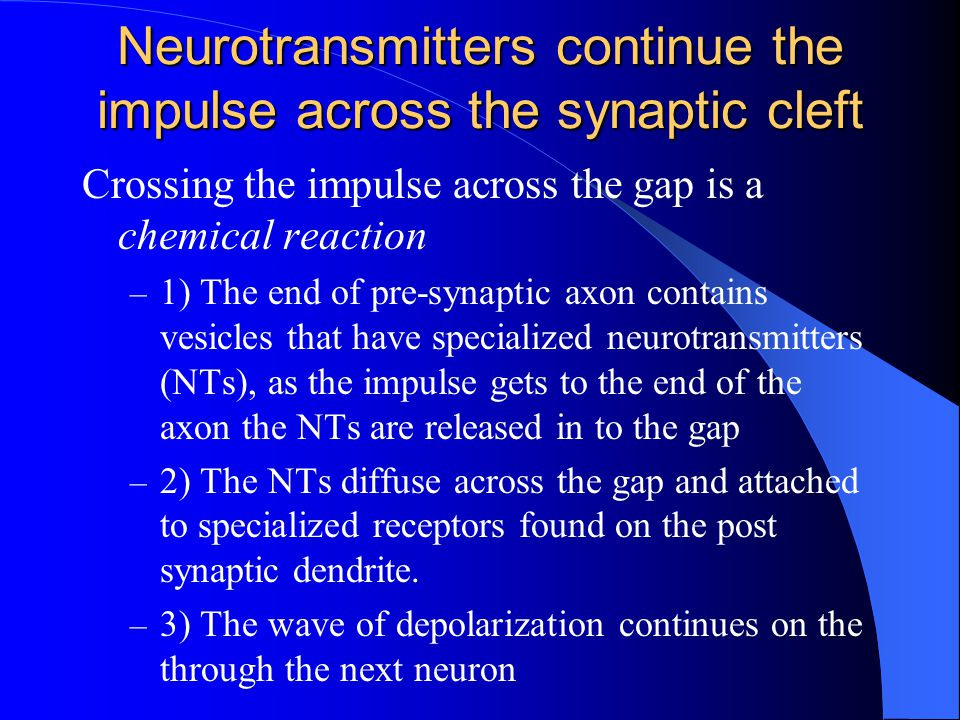 Neurotransmitters continue the impulse across the synaptic cleft