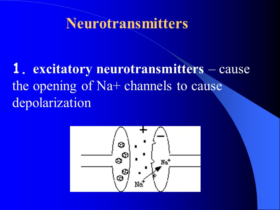 Neurotransmitters excitatory neurotransmitters – cause the opening of Na+ channels to cause depolarization.