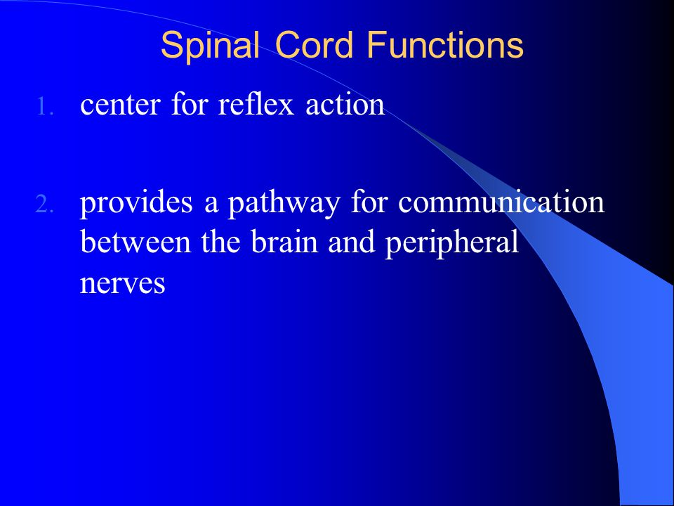 Spinal Cord Functions center for reflex action