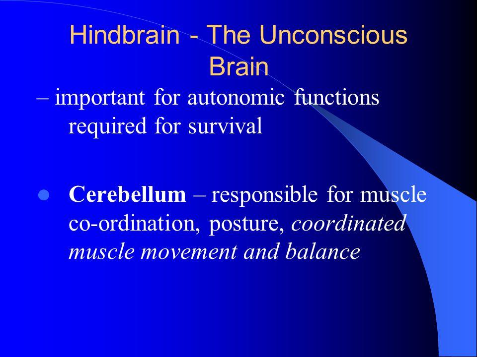 Hindbrain - The Unconscious Brain