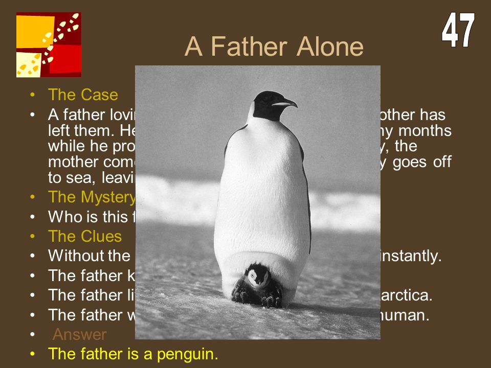 A Father Alone 47. The Case.