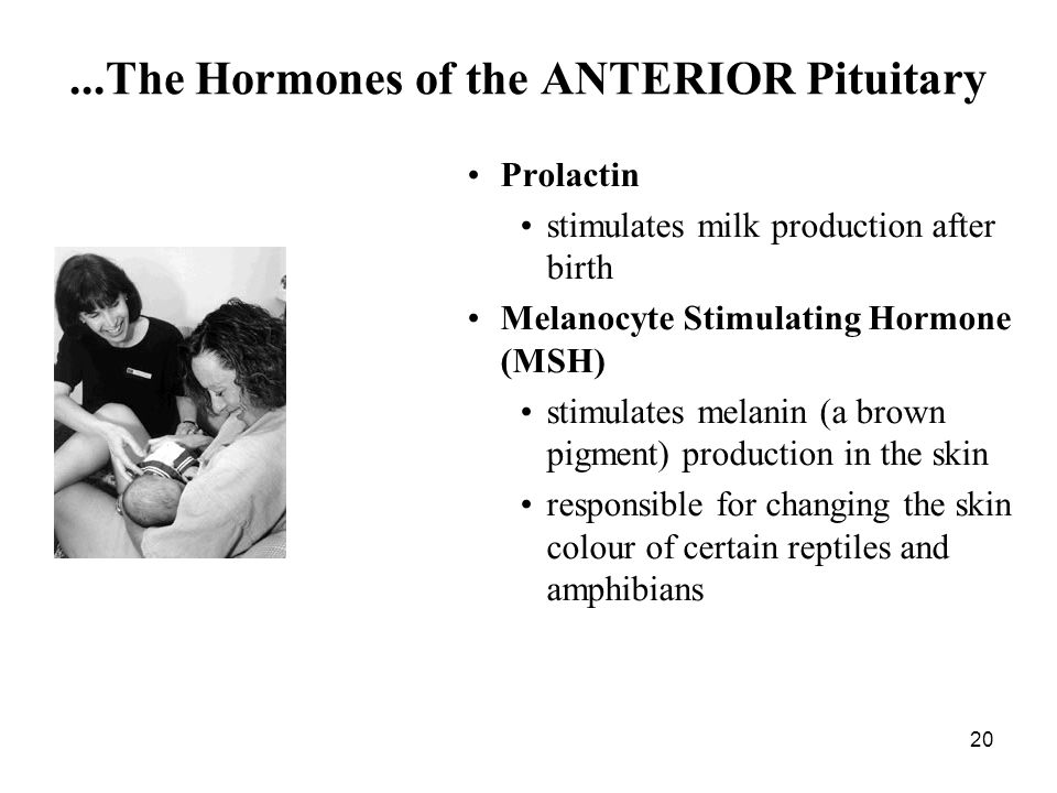 ...The Hormones of the ANTERIOR Pituitary