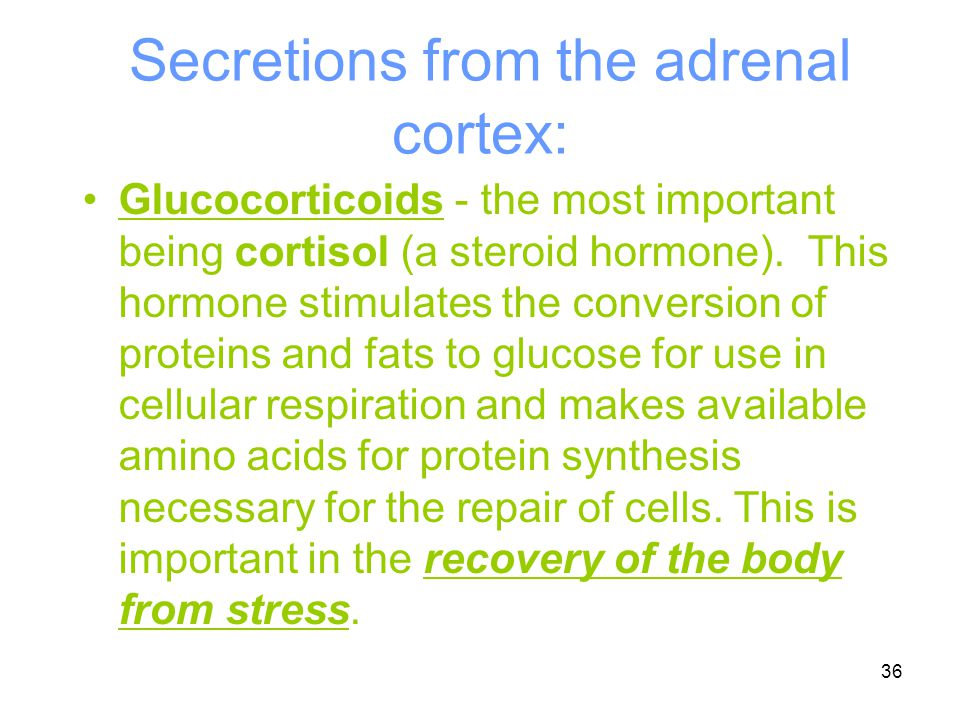 Secretions from the adrenal cortex: