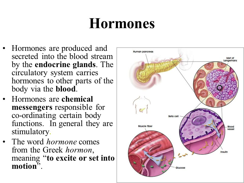 hormones and the endocrine system Hormones: definition, function & intro to the endocrine system this lesson introduces the endocrine system and provides a brief overview of each endocrine gland it also provides the definition of hormones and describes their general function inside the body.
