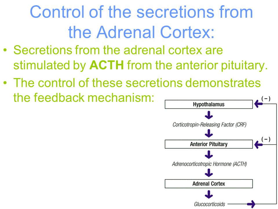 Control of the secretions from the Adrenal Cortex: