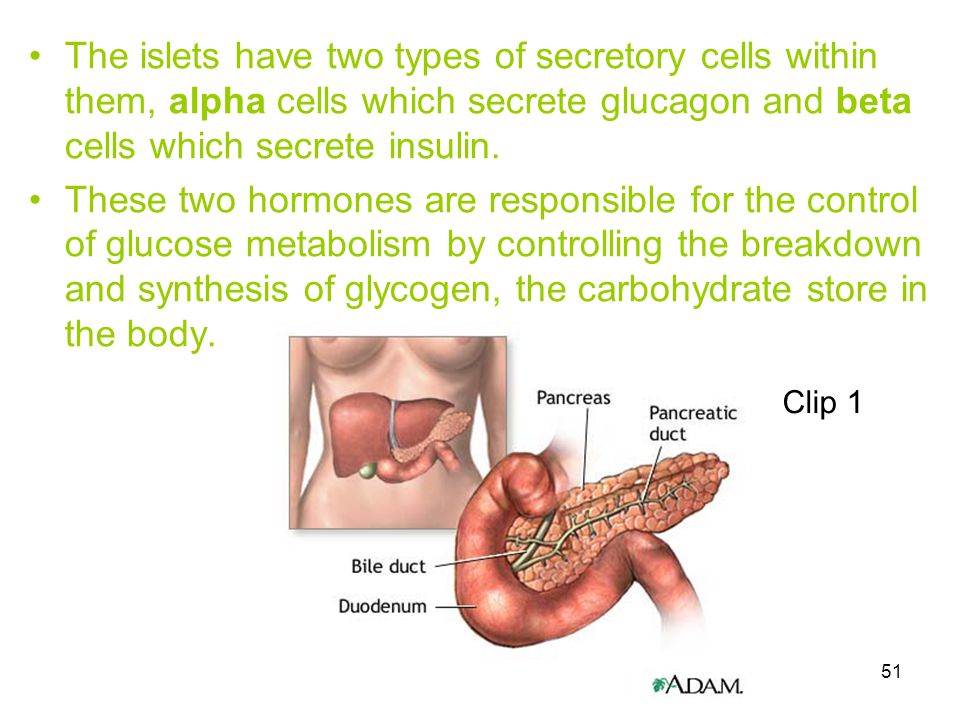 The islets have two types of secretory cells within them, alpha cells which secrete glucagon and beta cells which secrete insulin.