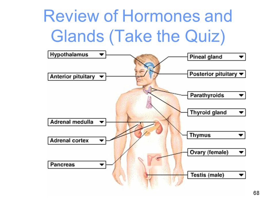 Review of Hormones and Glands (Take the Quiz)