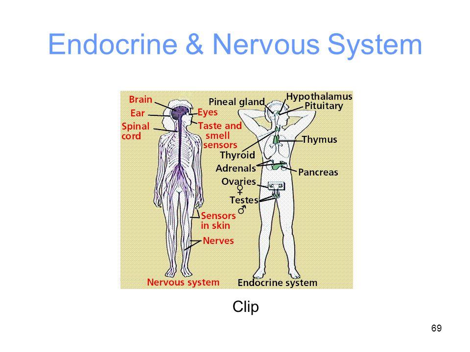 Endocrine & Nervous System