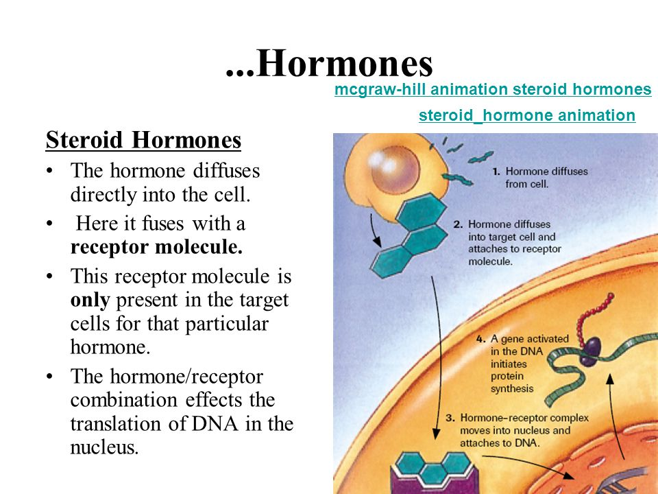 ...Hormones Steroid Hormones