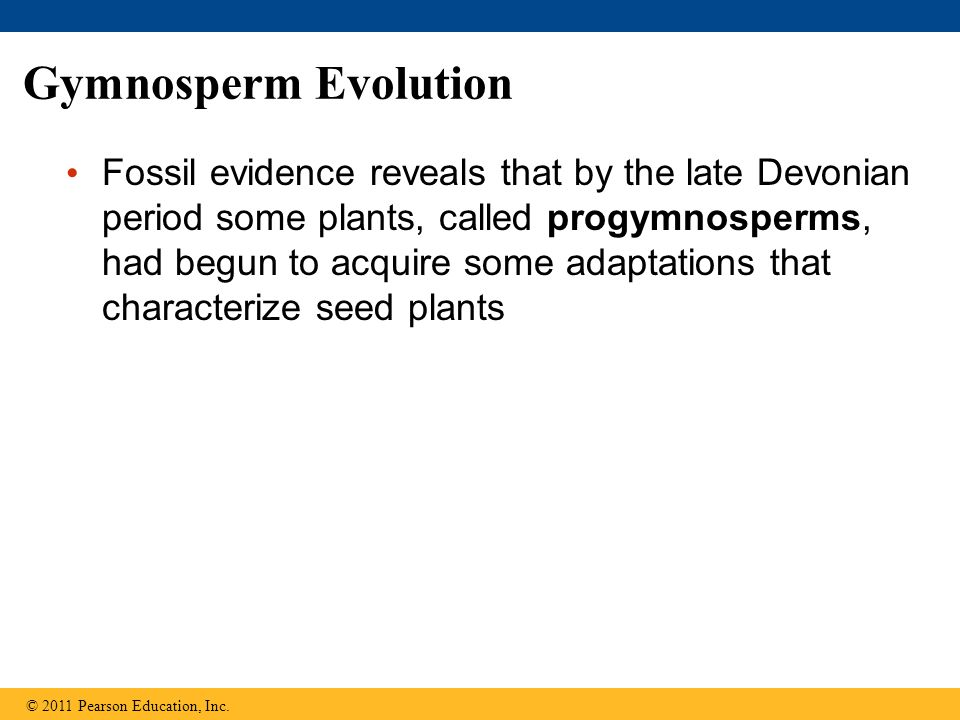Gymnosperm Evolution