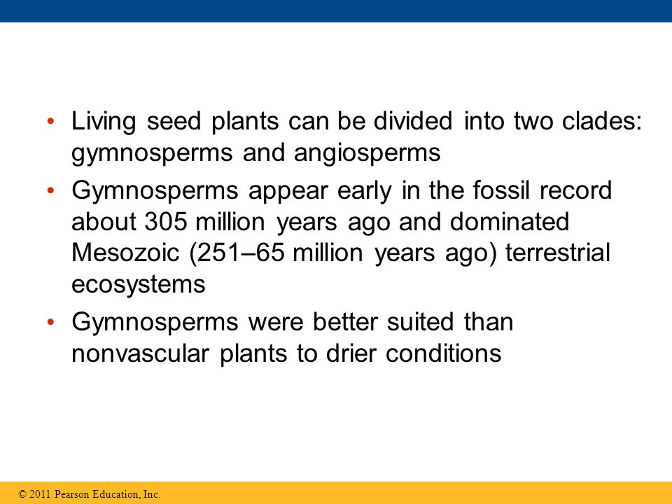 Living seed plants can be divided into two clades: gymnosperms and angiosperms