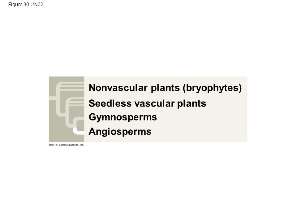 Nonvascular plants (bryophytes)