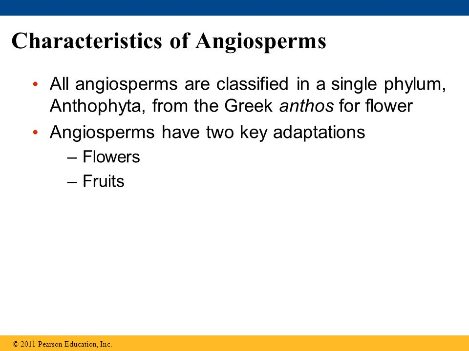 Characteristics of Angiosperms