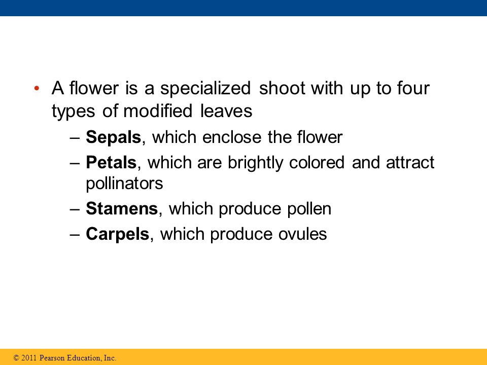 A flower is a specialized shoot with up to four types of modified leaves