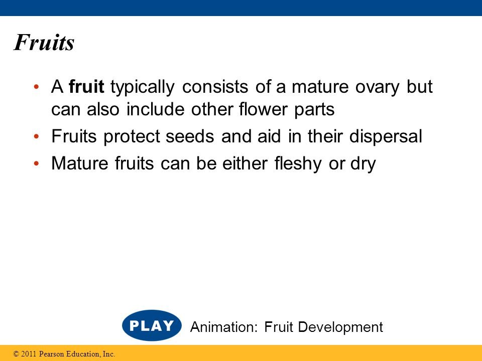 Fruits A fruit typically consists of a mature ovary but can also include other flower parts. Fruits protect seeds and aid in their dispersal.