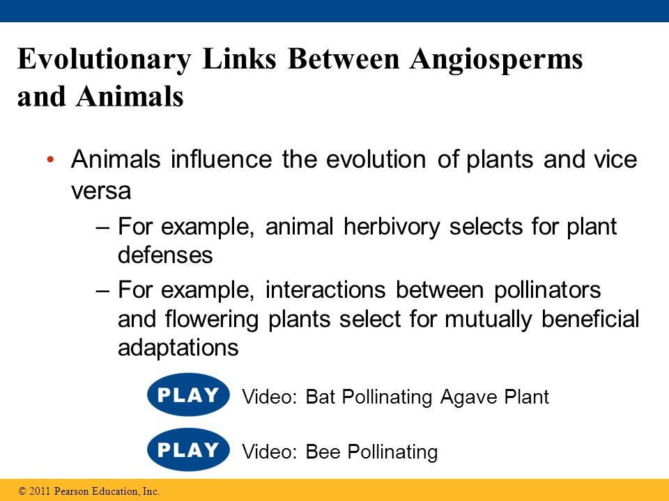 Evolutionary Links Between Angiosperms and Animals