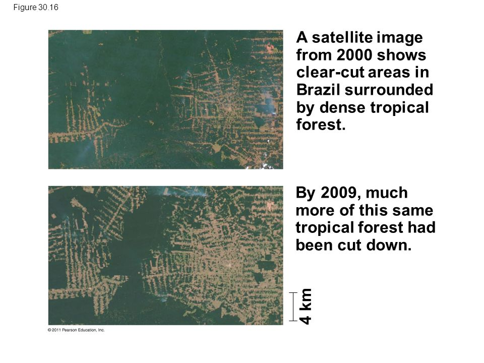 A satellite image from 2000 shows clear-cut areas in Brazil surrounded