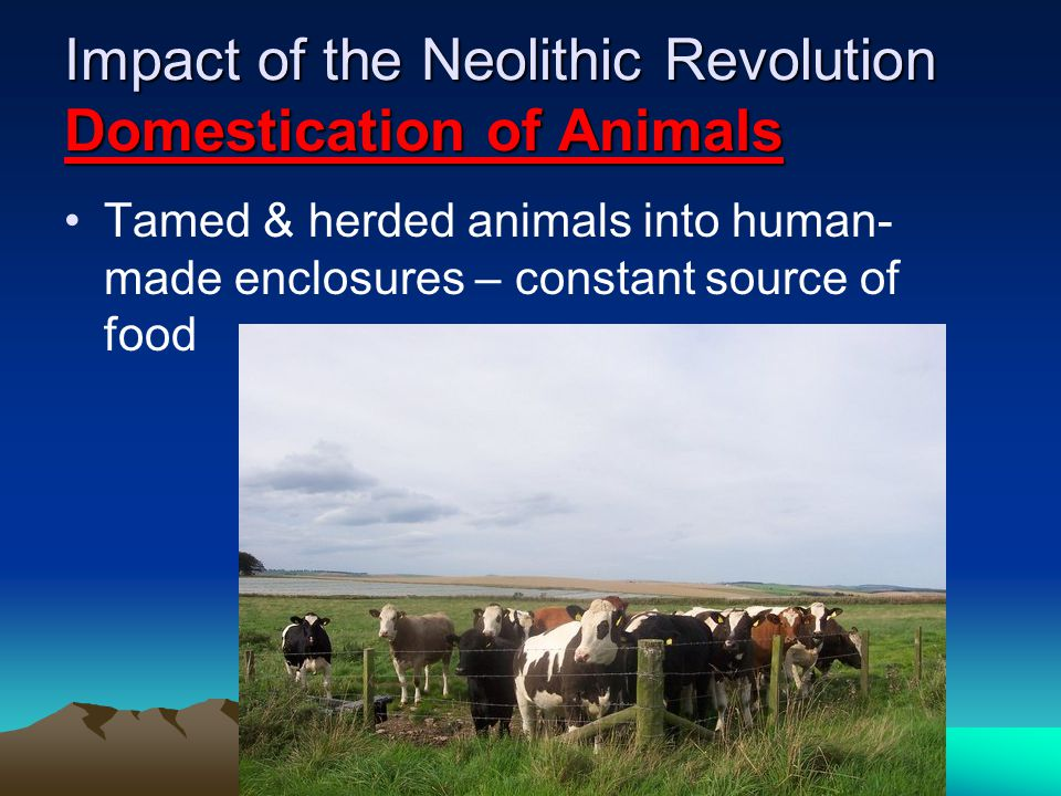 Impact of the Neolithic Revolution Domestication of Animals