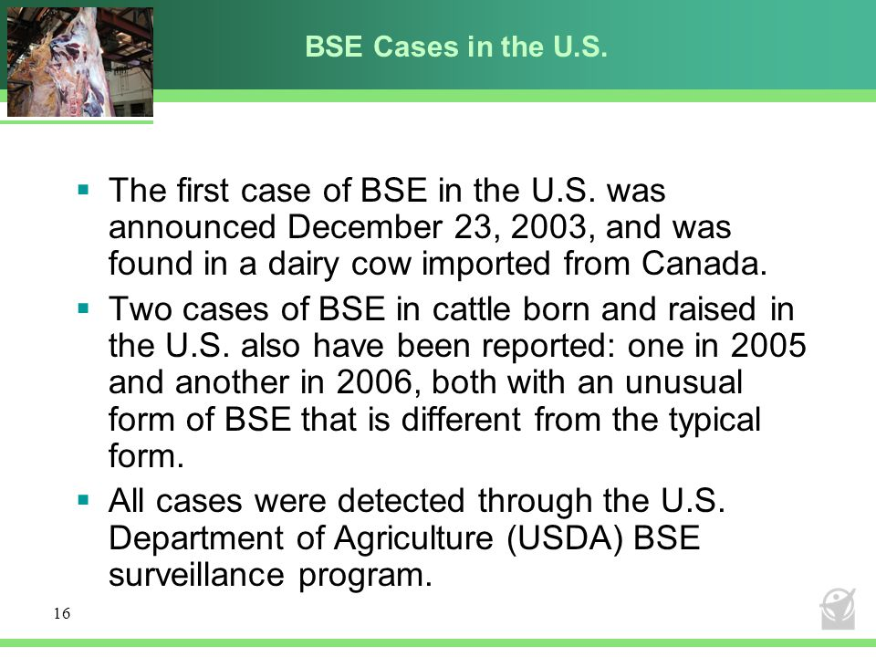 BSE Cases in the U.S. The first case of BSE in the U.S. was announced December 23, 2003, and was found in a dairy cow imported from Canada.