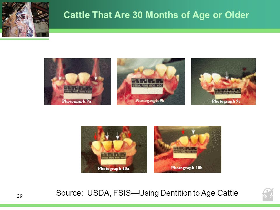 Cattle That Are 30 Months of Age or Older
