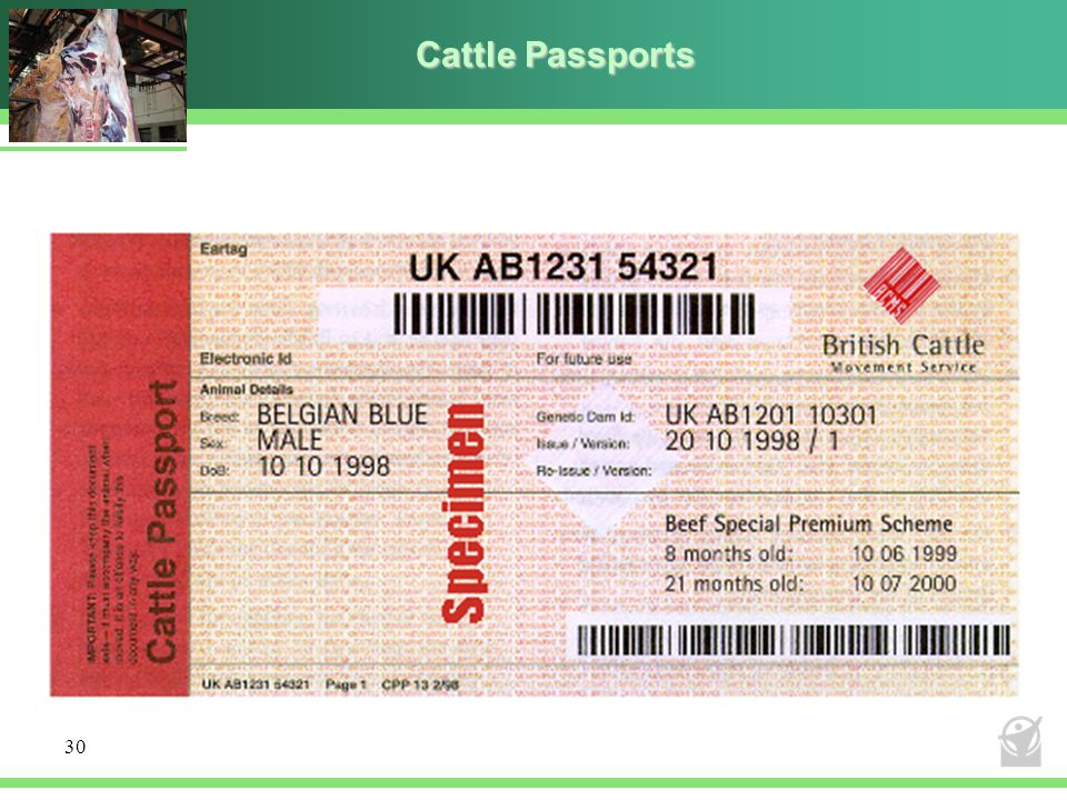 Cattle Passports 30